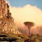На кого ложится налоговая нагрузка в ЮАР?