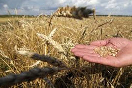 Фиксированный сельскохозяйственный налог повысят